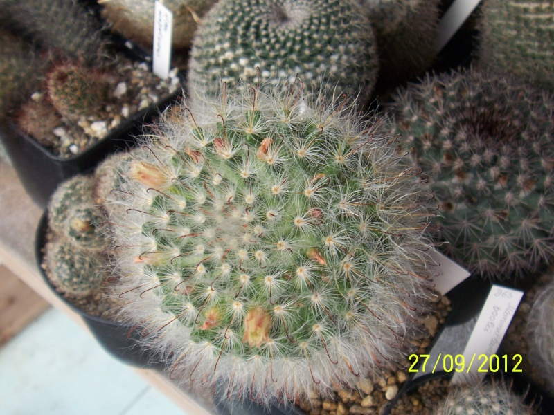 Cacti and Sukkulent in Köln, every day new flowers in the greenhouse Part 37 Bild_654