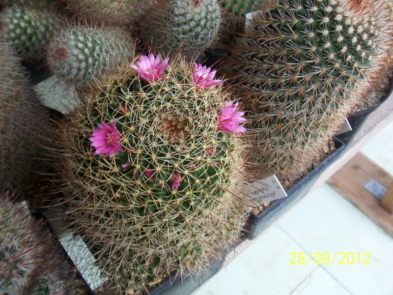 Cacti and Sukkulent in Köln, every day new flowers in the greenhouse Part 37 Bild_655