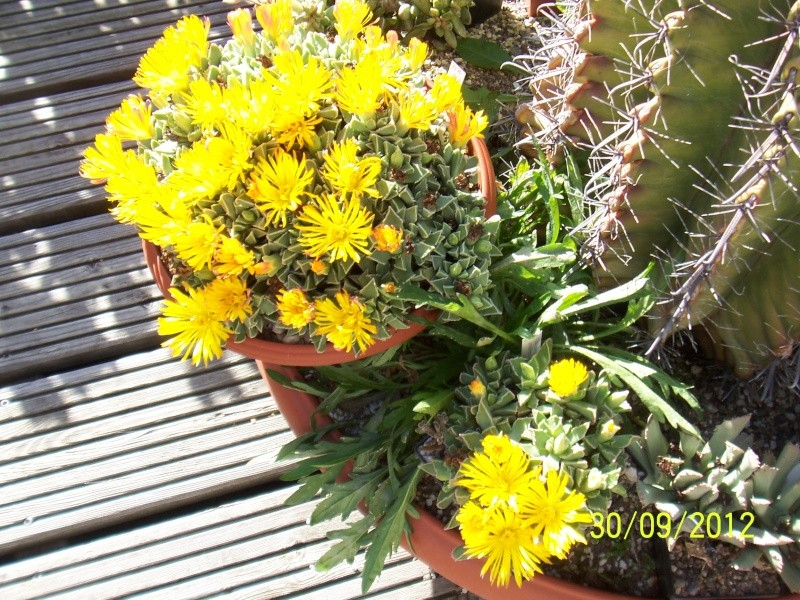Cacti and Sukkulent in Köln, every day new flowers in the greenhouse Part 38 Bild_692