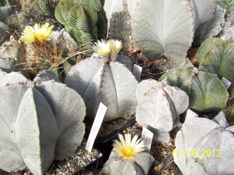 Cacti and Sukkulent in Köln, every day new flowers in the greenhouse Part 38 Bild_713
