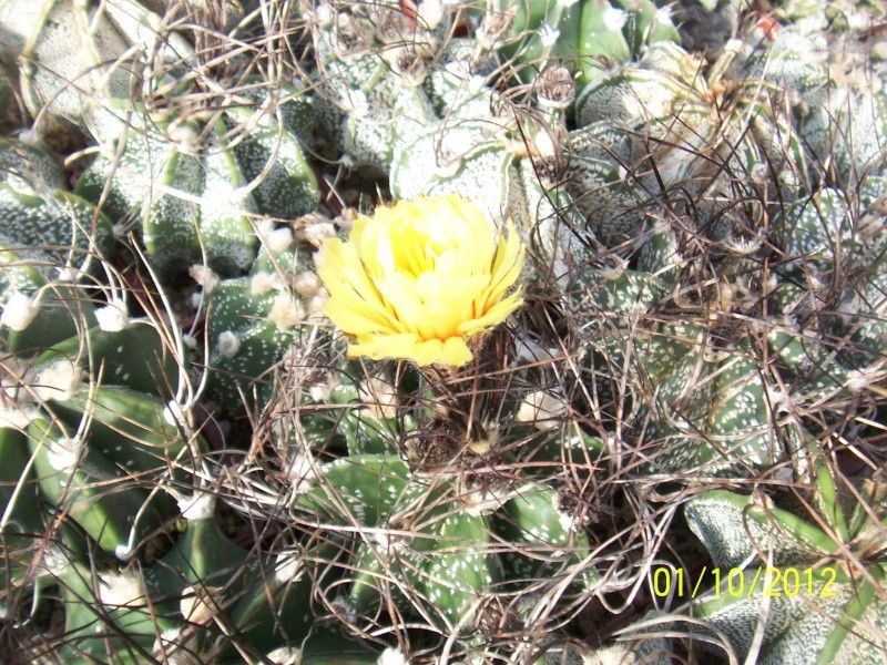 Cacti and Sukkulent in Köln, every day new flowers in the greenhouse Part 38 Bild_717