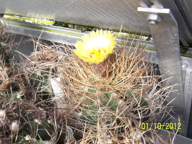 Cacti and Sukkulent in Köln, every day new flowers in the greenhouse Part 38 Bild_718