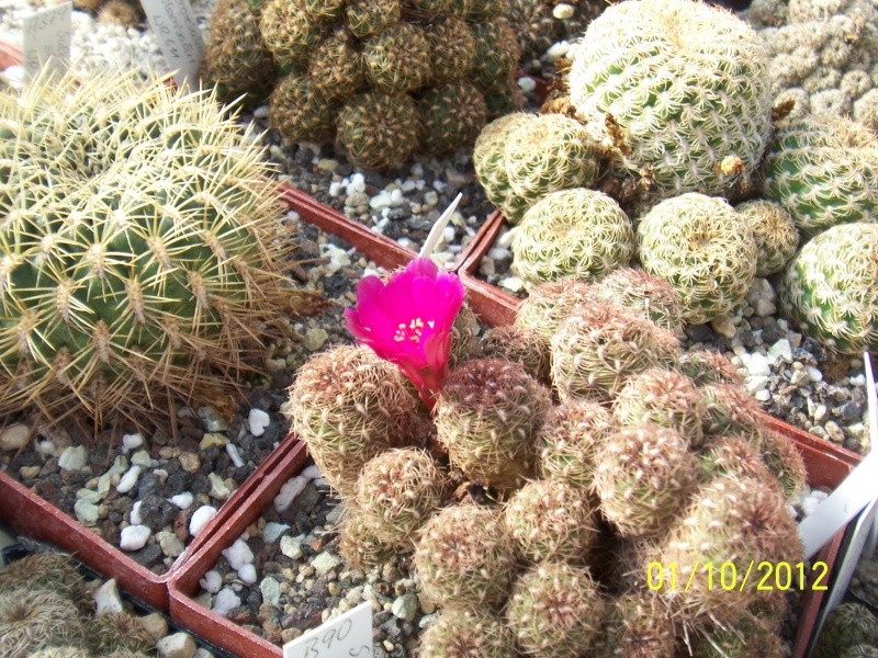 Cacti and Sukkulent in Köln, every day new flowers in the greenhouse Part 38 Bild_725