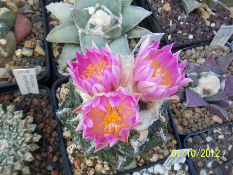 Cacti and Sukkulent in Köln, every day new flowers in the greenhouse Part 38 Bild_735