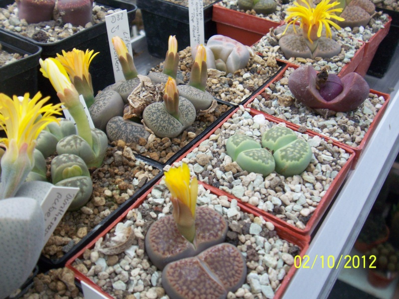 Cacti and Sukkulent in Köln, every day new flowers in the greenhouse Part 38 Bild_740