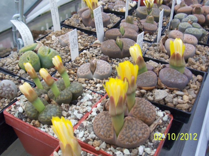 Cacti and Sukkulent in Köln, every day new flowers in the greenhouse Part 38 Bild_741