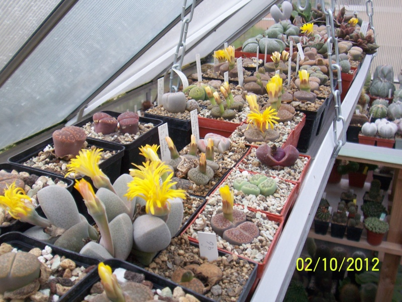 Cacti and Sukkulent in Köln, every day new flowers in the greenhouse Part 38 Bild_743