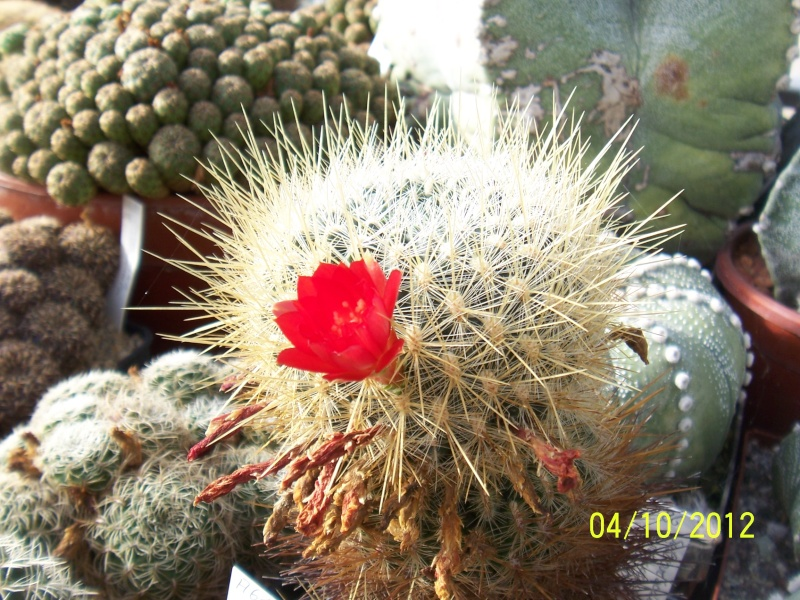 Cacti and Sukkulent in Köln, every day new flowers in the greenhouse Part 38 Bild_745
