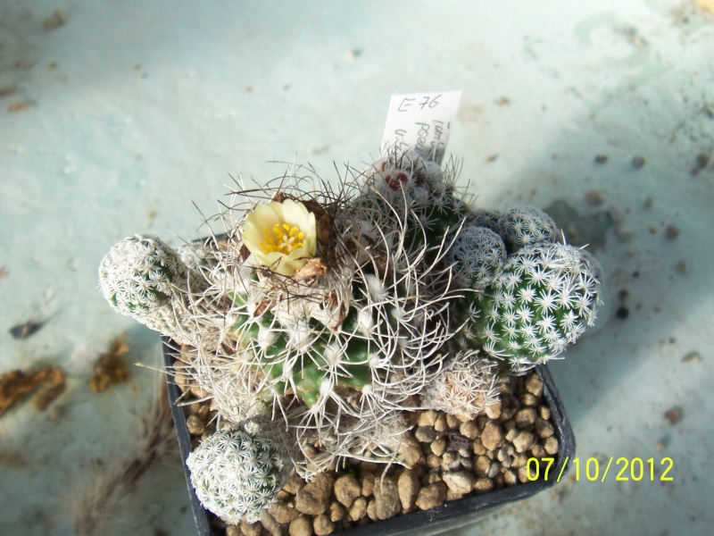 Cacti and Sukkulent in Köln, every day new flowers in the greenhouse Part 39 Bild_784