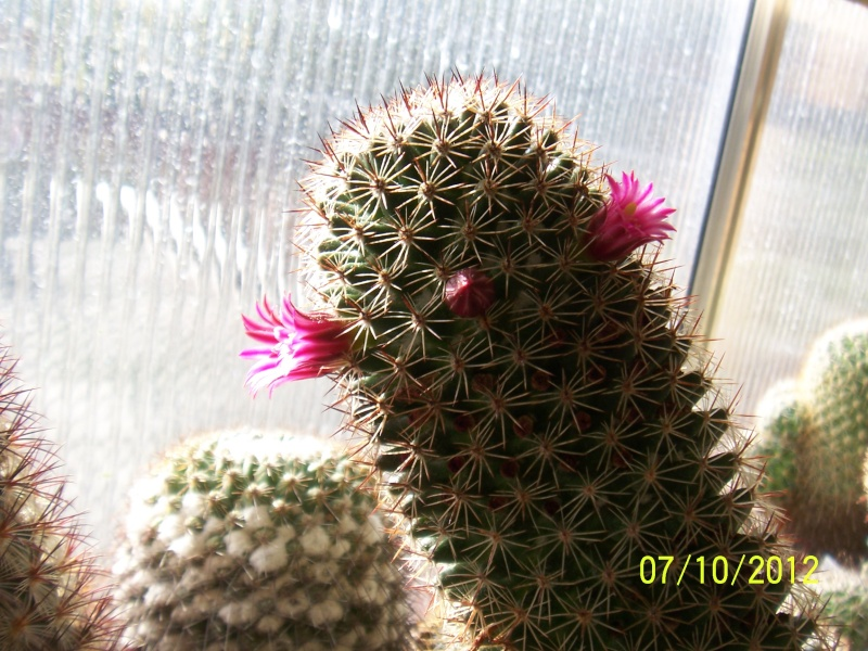 Cacti and Sukkulent in Köln, every day new flowers in the greenhouse Part 39 Bild_786