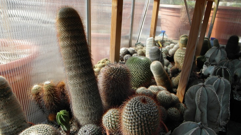 Cacti and Sukkulent in Köln, every day new flowers in the greenhouse Part 39 Bild_790