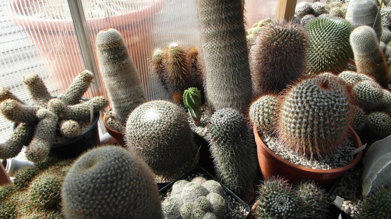 Cacti and Sukkulent in Köln, every day new flowers in the greenhouse Part 39 Bild_791
