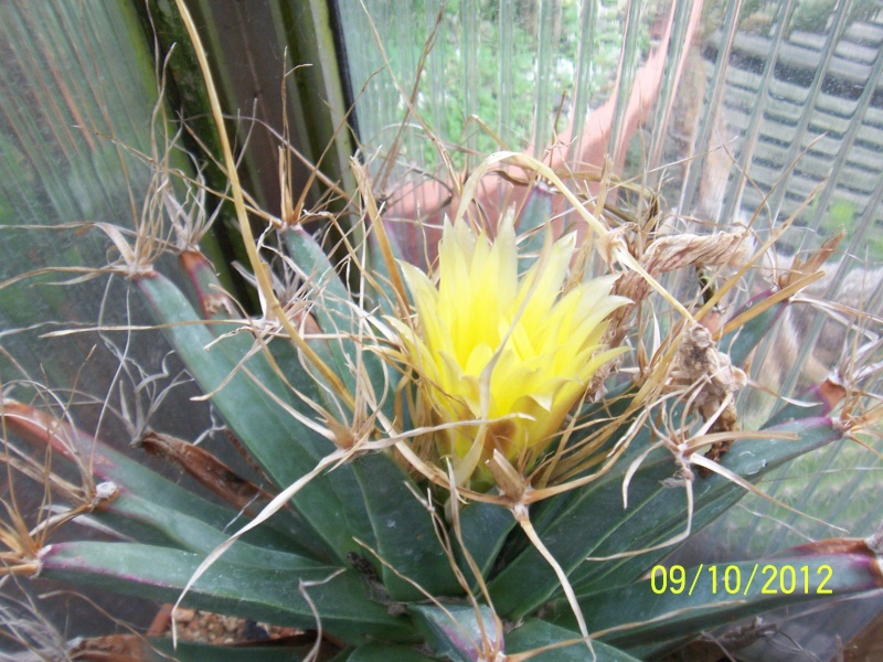 Cacti and Sukkulent in Köln, every day new flowers in the greenhouse Part 39 Bild_822