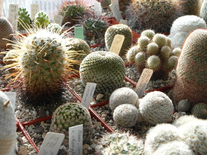 Cacti and Sukkulent in Köln, every day new flowers in the greenhouse Part 40 Bild_891