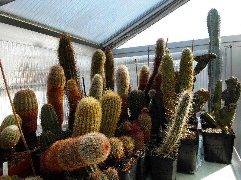 Cacti and Sukkulent in Köln, every day new flowers in the greenhouse Part 40 Bild_918