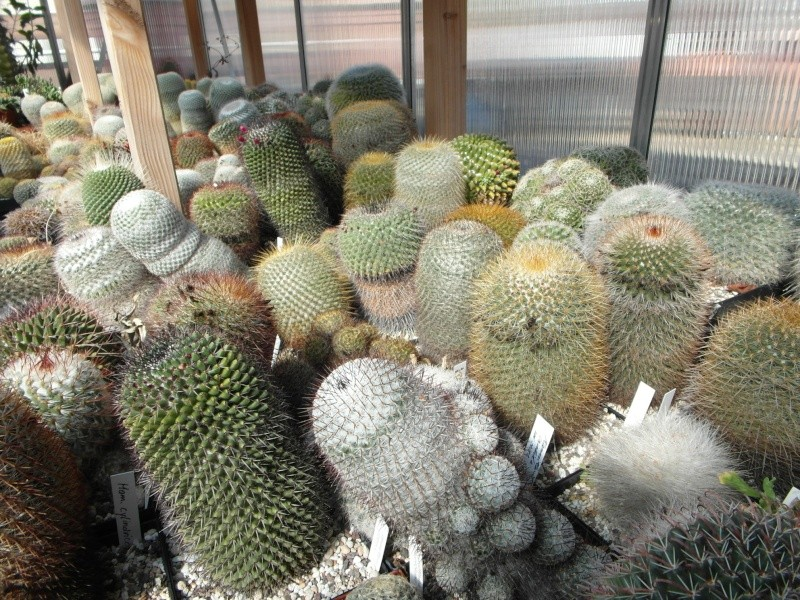 Cacti and Sukkulent in Köln, every day new flowers in the greenhouse Part 40 Bild_921
