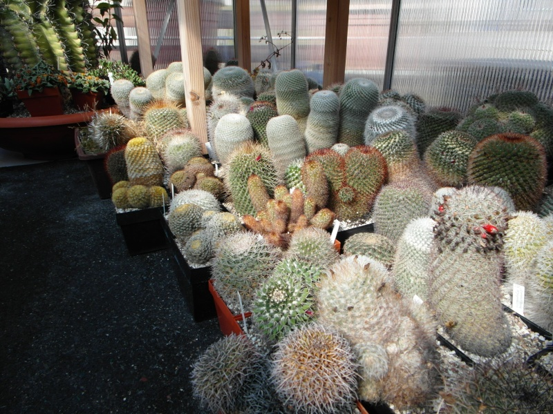 Cacti and Sukkulent in Köln, every day new flowers in the greenhouse Part 40 Bild_922
