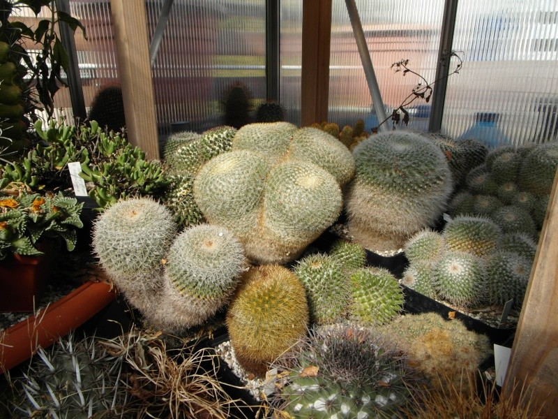 Cacti and Sukkulent in Köln, every day new flowers in the greenhouse Part 40 Bild_923