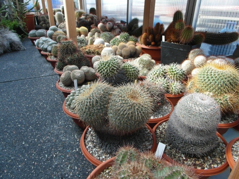 Cacti and Sukkulent in Köln, every day new flowers in the greenhouse Part 40 Bild_924