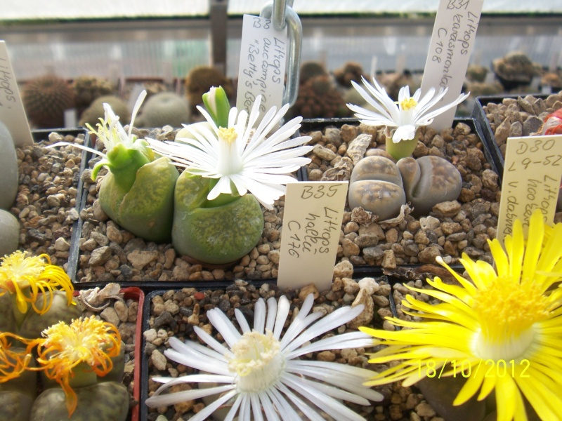 Cacti and Sukkulent in Köln, every day new flowers in the greenhouse Part 40 Bild_939
