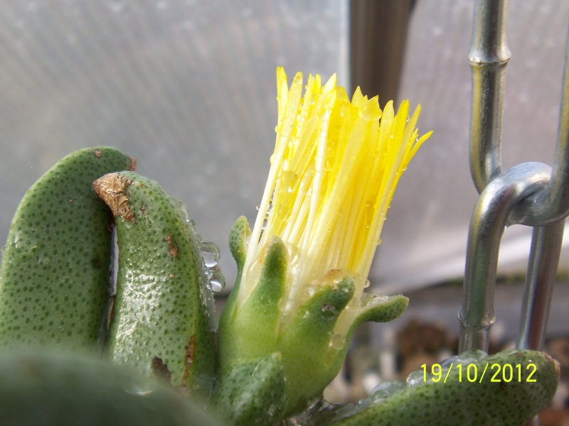 Cacti and Sukkulent in Köln, every day new flowers in the greenhouse Part 41 Bild_957