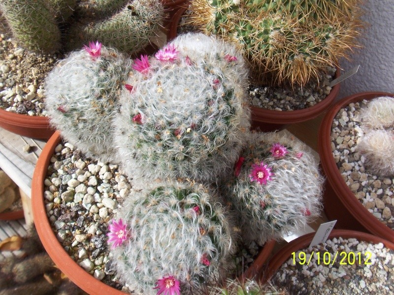 Cacti and Sukkulent in Köln, every day new flowers in the greenhouse Part 41 Bild_967