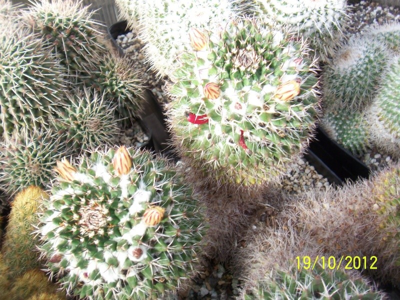 Cacti and Sukkulent in Köln, every day new flowers in the greenhouse Part 41 Bild_971