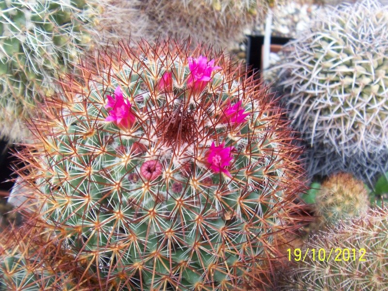 Cacti and Sukkulent in Köln, every day new flowers in the greenhouse Part 41 Bild_972