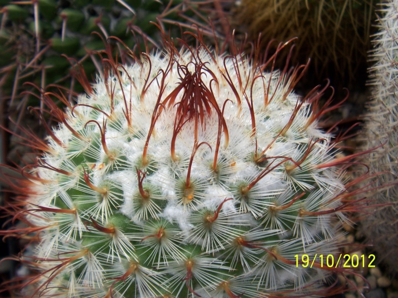 Cacti and Sukkulent in Köln, every day new flowers in the greenhouse Part 41 Bild_974
