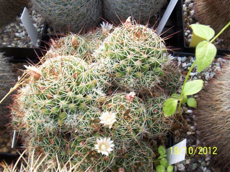 Cacti and Sukkulent in Köln, every day new flowers in the greenhouse Part 41 Bild_976