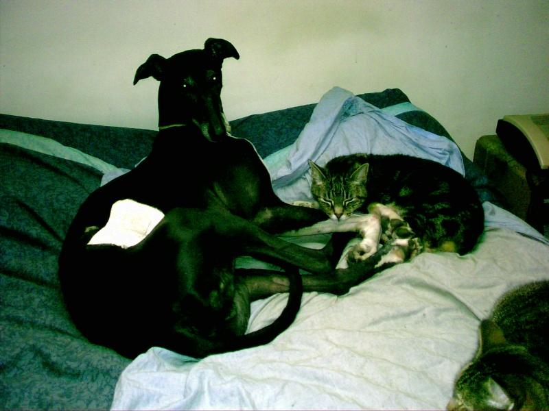 Posture originale pour dormir....et chez vous c'est comment??? - Page 3 Pic00515