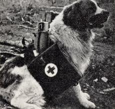 chien de guerre Images10