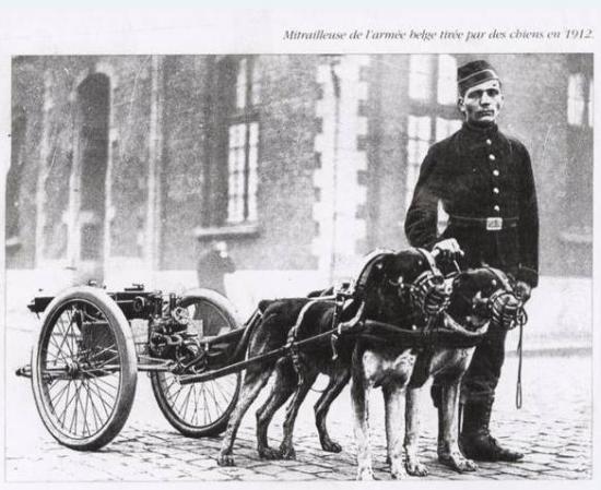 chien de guerre Mitrai10