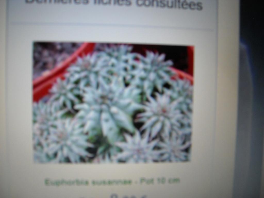 Succulente    Sedum Sexangulare Dscn8610
