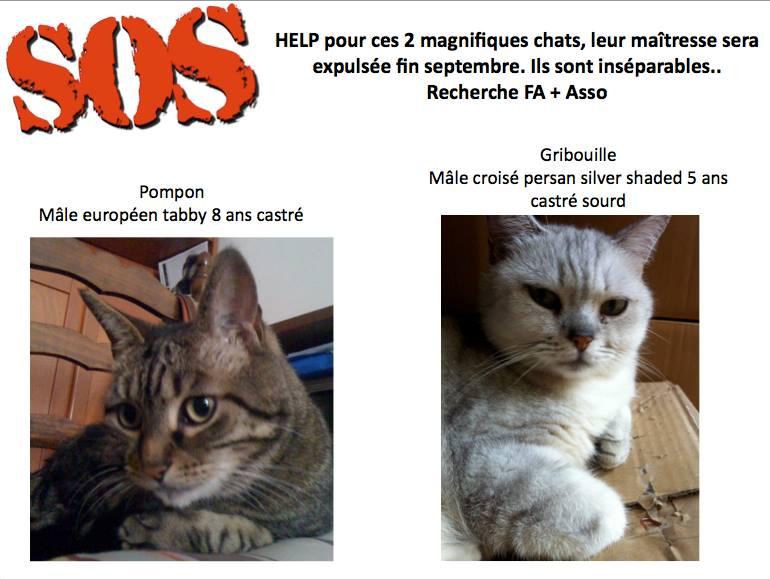 HELP pour 2 chats dont un croisé persan sourd 12383210