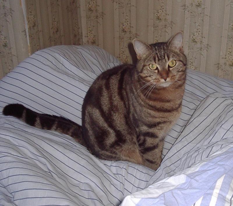 Twisty, chat perdu à RENNES (rue de Châteaugiron) Imgp0010