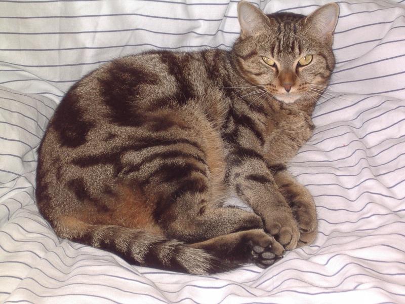 Twisty, chat perdu à RENNES (rue de Châteaugiron) Imgp0011