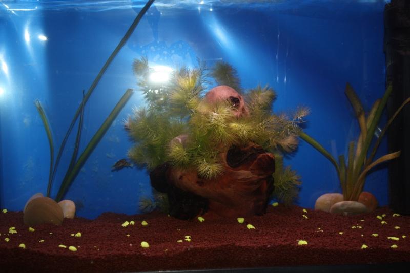 L'Aquarium d'Ange  - Page 2 Img_7312