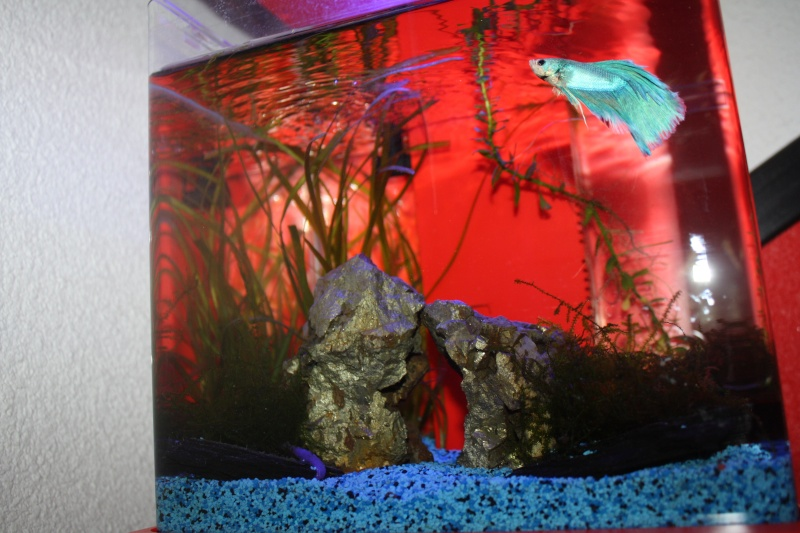 L'Aquarium d'Ange  - Page 2 Img_7410