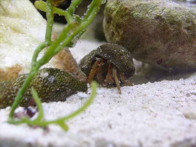 Hermit Crab Pics S7306610