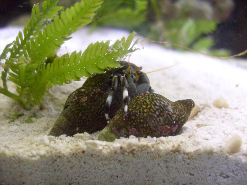 Hermit Crab Pics S7306611