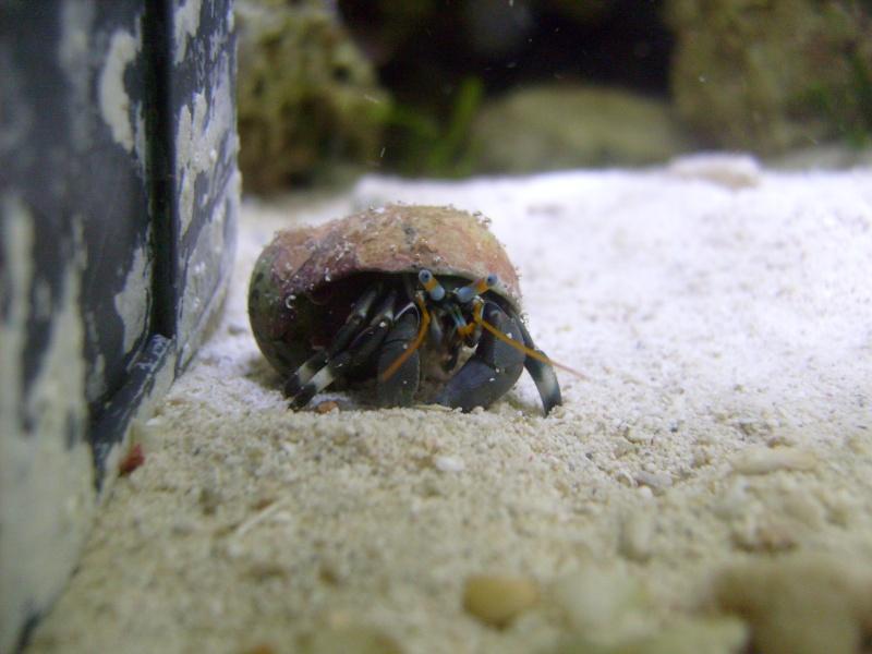 Hermit Crab Pics S7306612
