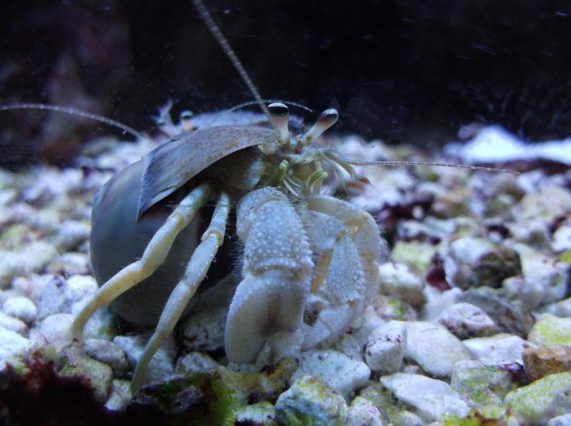 Hermit Crab Pics Dscf1012