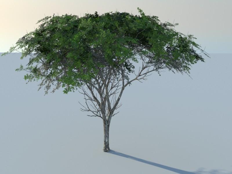 Nouveau logiciel de création de végétation Version de base gratuite ! Acacia10