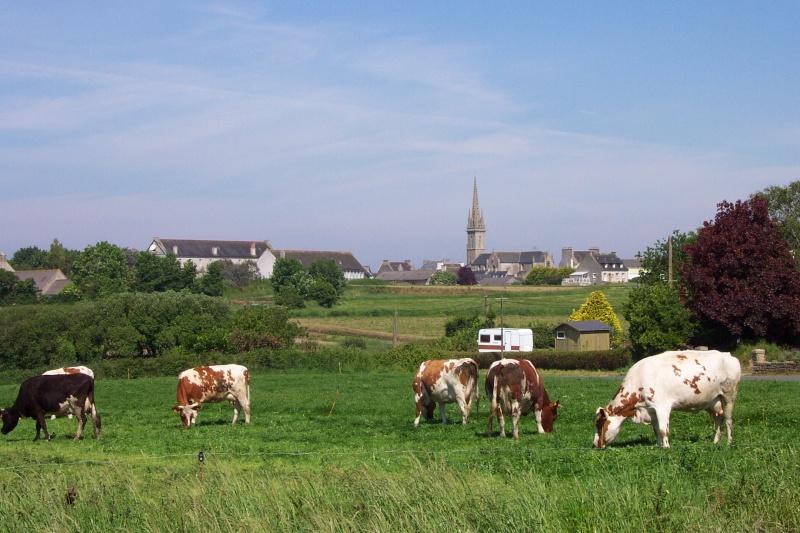 Les vaches Dcp_0311