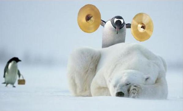 un petit pingouin facétieux Pingou10