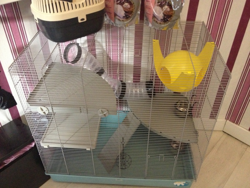 Ma nouvelle Cage  Img_1411