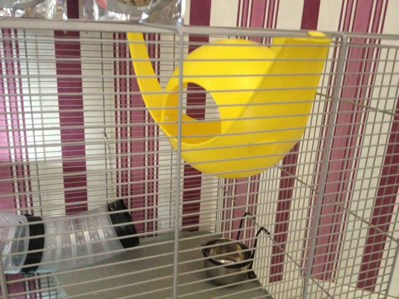 Ma nouvelle Cage  Img_1413