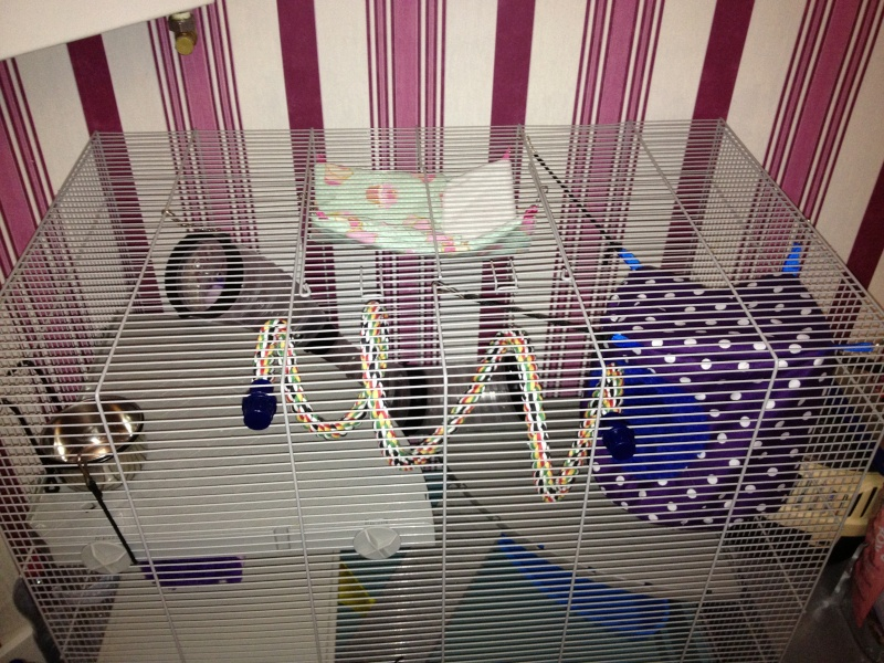 Ma nouvelle Cage  Img_1415