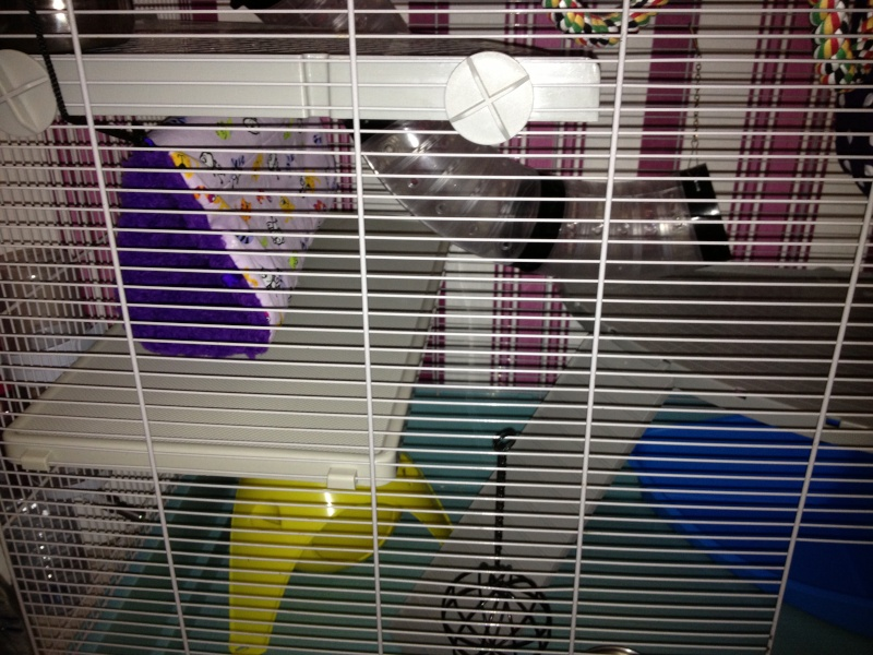 Ma nouvelle Cage  Img_1416